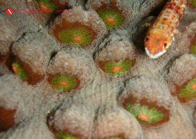 Lezard Fish