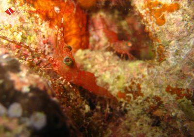 Shrimp (5)