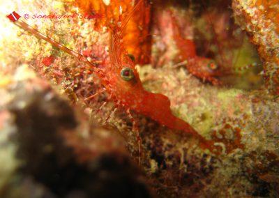 Shrimp (6)