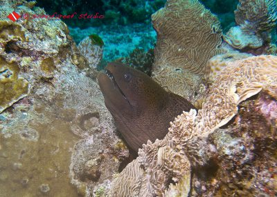 Moray Eel-4