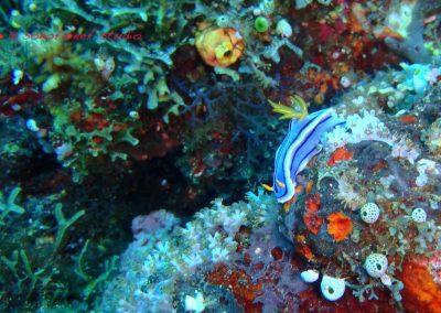 Nudibranch-1