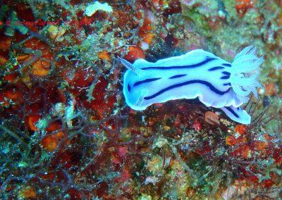 Nudibranch-2