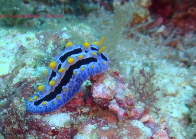 Nudibranch-3