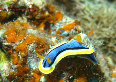 Nudibranch (41)