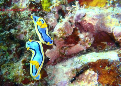 Nudibranch-7