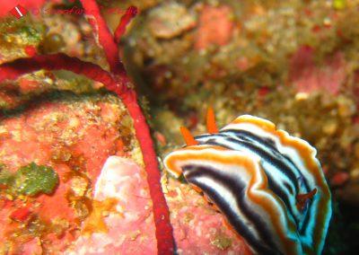 Nudibranch (7)