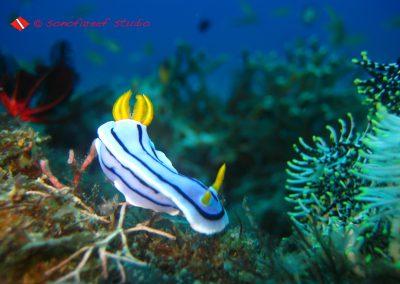 Nudibranch-8