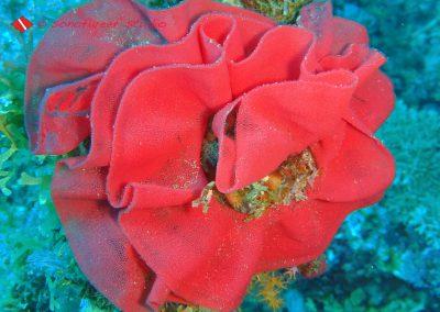 Nudibranch Egg