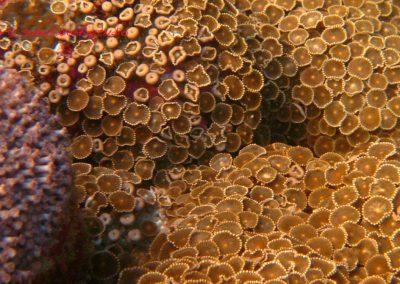 Reef (12)