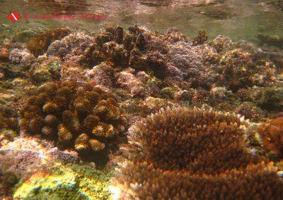 Reef (14)