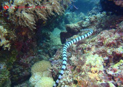 Sea Snake-1