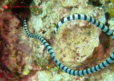 Sea Snake (4)
