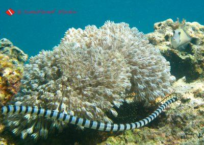 Sea Snake (7)