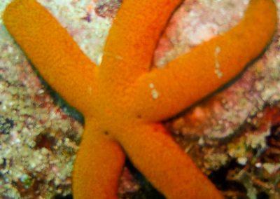 Sea Star-2