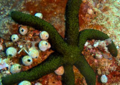 Sea Star-3