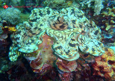 Takot Reef-1