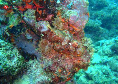 Takot Reef-9
